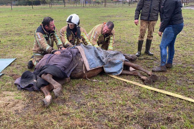 BFM Redding Paard Schelle